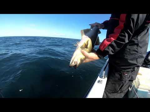 Summer Boatfishing off Dunbar