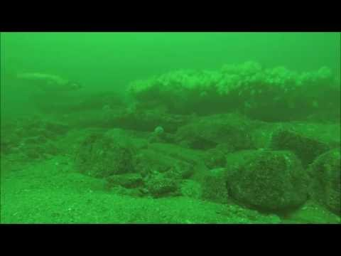 Cod on the reefs off Dunbar