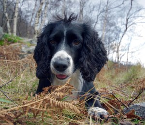Bonnie stick hunting on Etive