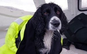 A-wet-and-rather-unhappy-Bonnie-dog