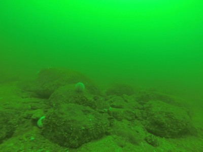 Underwater view in about 50 feet a few miles from Dunbar