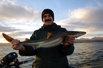 Fish of the day - a modest spurdog for Trevor