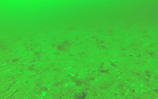 Port William seabed