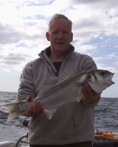 A nice bass, caught on whole mackerel bait intended for tope - complete with wire trace