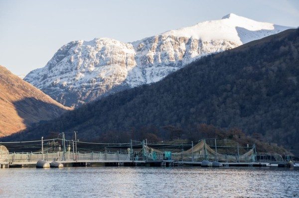 Salmon cages overshadowed by Glencoe