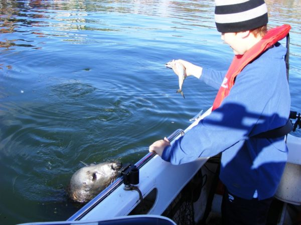 Mike feeding the seal in Dunbar Harbour