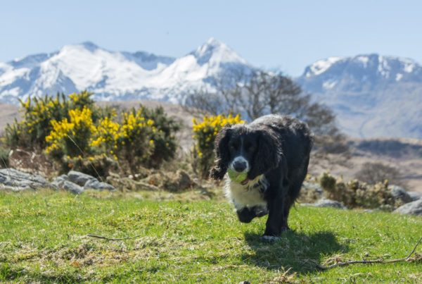 Bonnie playing on the shore at Etive, with Cruachan behind
