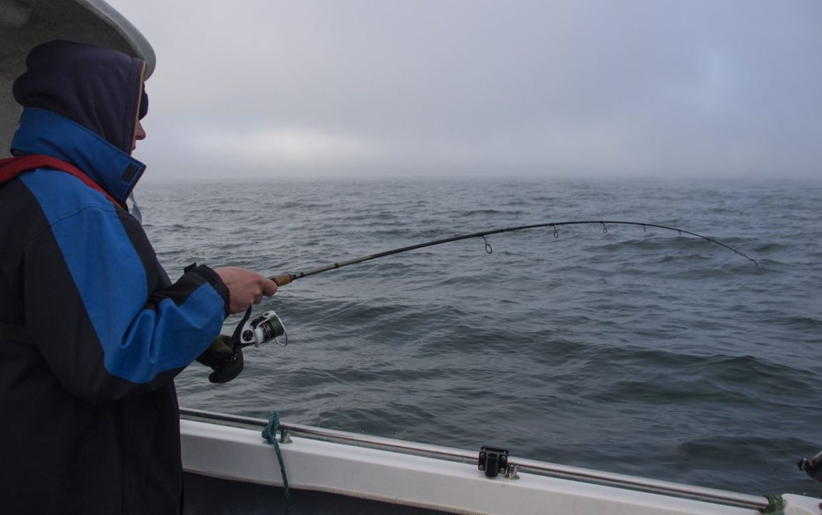 Ian plays a small codling against a gray sea and a gray sky
