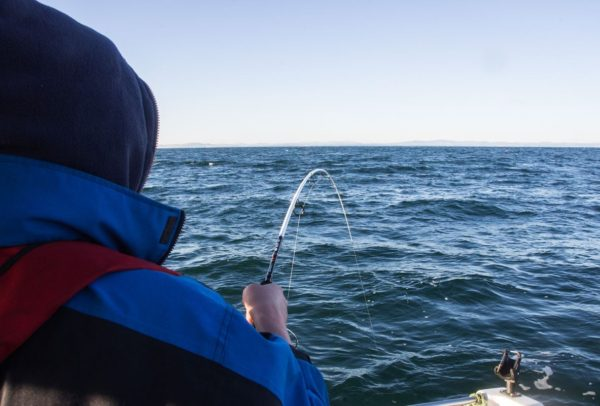Ian's rod with a nice bend on it after hitting into a nice codling