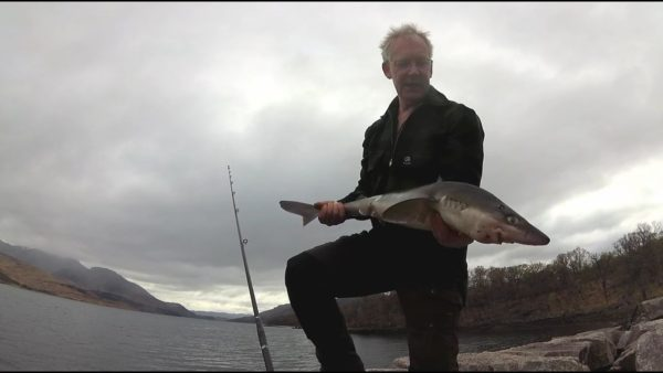A decent shore-caught spurdog from Loch Etive