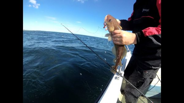 Fresh from the sea - a small codling comes aboard my Longliner2
