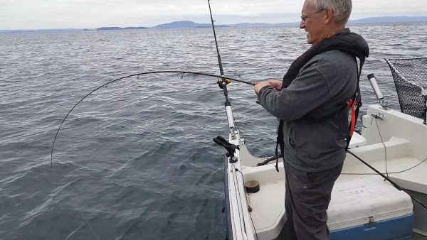 An inshore pollack puts a bend in my rod, fishing off the south coast of Mull