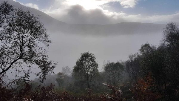 A misty autumn morning looking across scrubby birch woods down towards Loch Etive