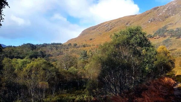 The Loch Etive woods are a lovely place to explore as the autumn colours start to show