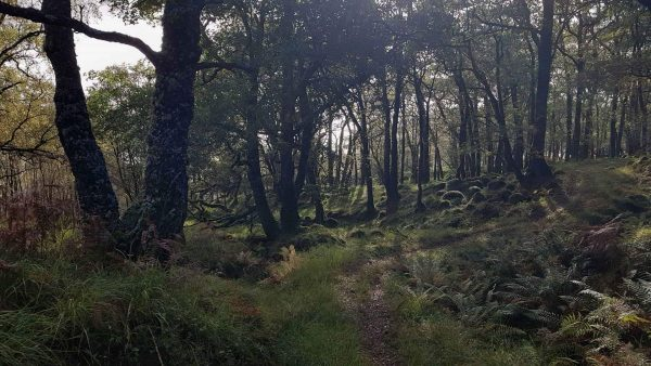 Stunning oak woodlands line the banks of Loch Etive, with my path winding between them