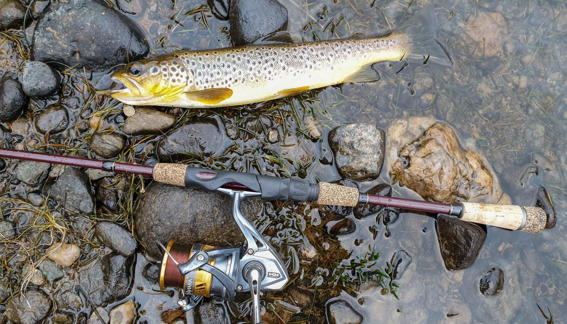 A thin but pretty brown trout from Loch Lubnaig